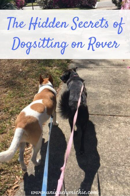 The Hidden Secrets of Dogsitting on Rover
